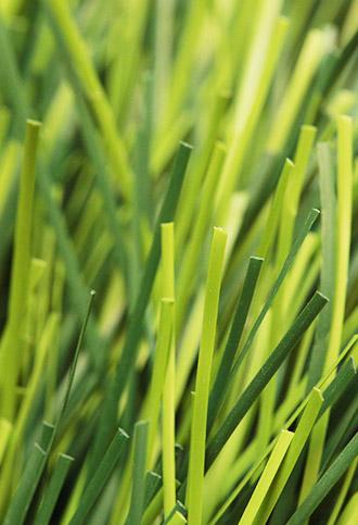 多功能球场用草
