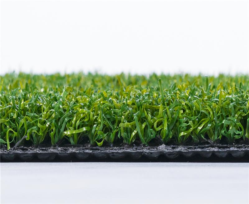门球场地用草