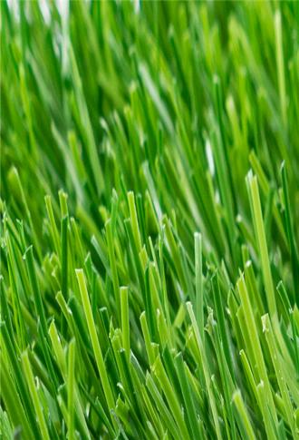 足球场专用草坪