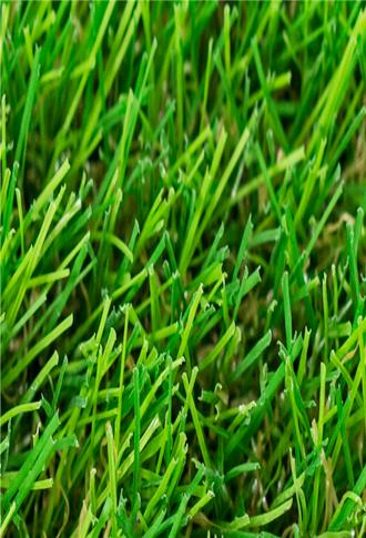 景观休闲用草