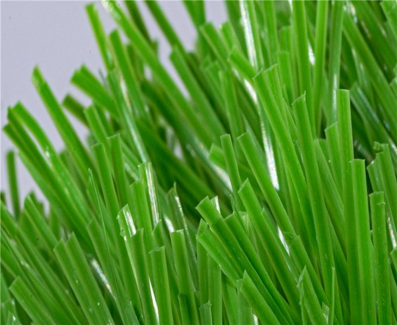 橄榄球专用草